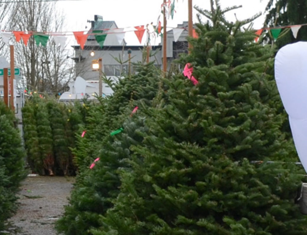 NEW Online Christmas Tree Lot Quoter – Now Available!